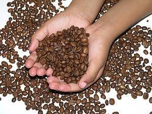 The Role Caffeine Plays In Coffee And In Losing Weight