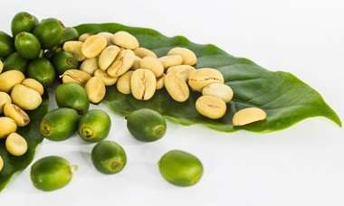 Green Coffee Bean Extract and Antioxidants