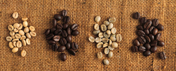 Arabica Plant vs. Robusta Coffee Plant